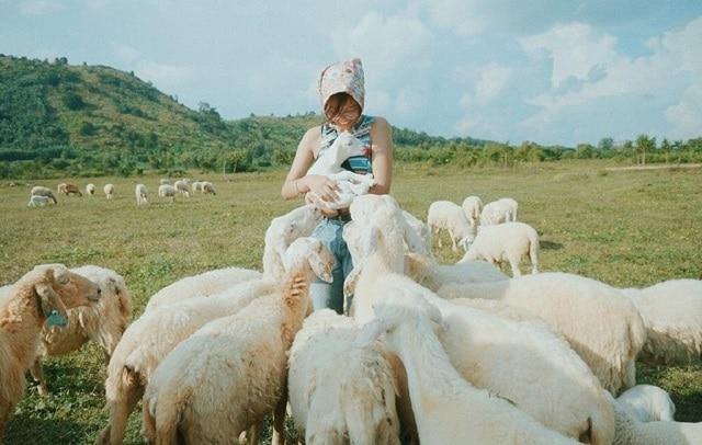 Cánh đồng cừu Vũng Tàu