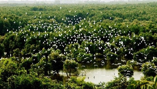 Vườn quốc gia Tràm Chim – điểm đến không thể bỏ lỡ ở Đồng Tháp